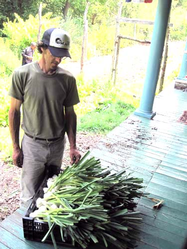 Andrew checking out the garlic harvest