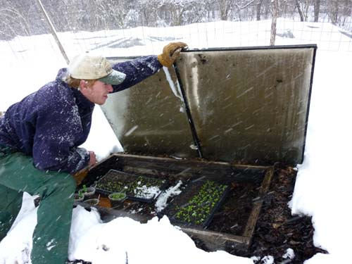 JP checks out seedlings during a big snowstorm